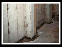 Mold and mildew in wet basement